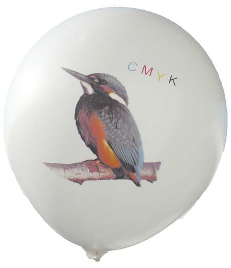 Eisvogel Perfekt-Druck in CMYK 4Farben Passegenau bei Ballonpoint und Gummiwerk Czermak und Feger